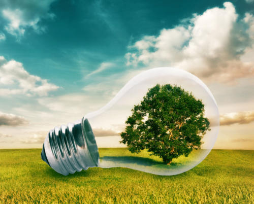 Light bulb with a tree growing inside in green field. Environment, eco technology and energy concept.